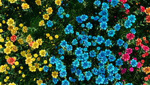 Multicolored Flower Background. Floral Wallpaper With Yellow, Turquoise And Orange Roses. 3D Render