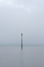 A Cormorant Perched On A Marker Post Off The Beach In Eastbourne, East Sussex. Light Grey Cloud And Clam Sea.