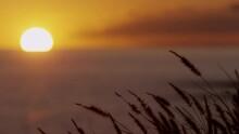 4K: Golden Sunset Rack Focus From Foxtails To Ocean Horizon Sunset