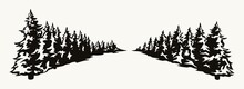 Fir Trees Rows In Perspective Concept