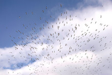 Many Birds Are Circling In An Organized Way