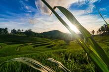 Tropical Rice Fields In Rural Landscape, Mandalika, Lombok, West Nusa Tenggara, Indonesia