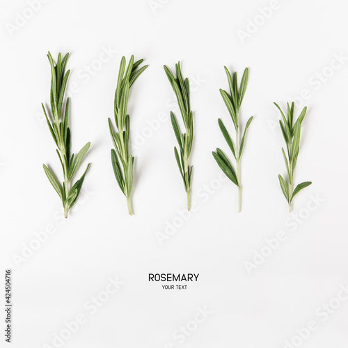 Fototapeta bunch of fresh green rosemary on white background. flat lay with copy space obraz