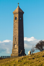 Tyndale Monument In Gloucestershire, England. Autumn Mood, Orange Brick And Grass. On The Hill Fat Sheep Is Standing And Looks To The Camera. The Sheep Stands Between Tower And Burgundy Tree.