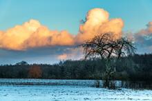Winter Im Naturschutzgebiet Schellbruch An Der Trave Schleswig Holstein