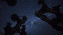 Astro Time Lapse Of Milky Way Over Joshua Tree In Mojave Desert -Zoom In-
