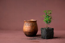 Myrtle Plant And Clay Pot On Terracotta Background, Small Plant With Soil, The Birth Of Life