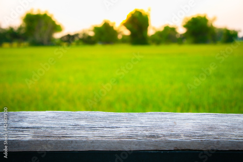 Fotografie, Obraz Wooden board empty table in front of paddy field in morning time with sunlight on background