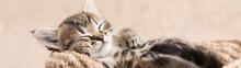 Tabby Kitten Cute Sleeping In A Wicker Basket Banner