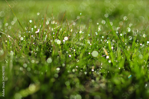 Canvas Print dew on grass