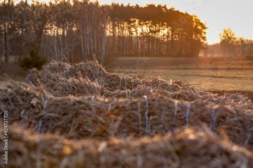 Fototapeta Wschód słońca nad polem obraz