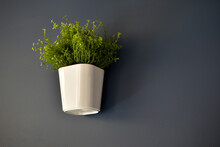 White Decorative Pots With Greenery On A Blue Wall
