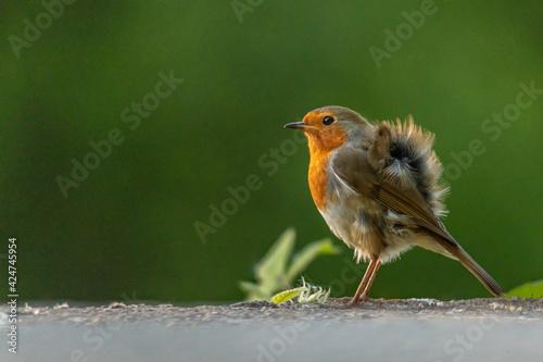 Photo Robin branch park outdoor Cork Ireland wings nature natural life redbreast