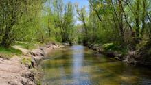 Paso De Rio Por La Naturaleza Entre Arboles Y Animales En Un Dia Soleado