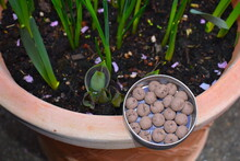 Each Seed Ball Contains Seeds From A Mix Of Purple Loosestrife Forget-me-not Musk Mallow Red Campion Yarrow Plus Pollinator-friendly Annuals Chamomile Cornflower Corn Marigold Night-flowering Catchfly