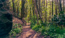 Footpath In The Woods