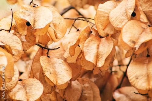 Billede på lærred Hojas secas, otoño.
