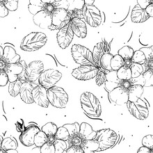 Hand Drawn Seamless Pattern Black And White Of Blossom Dogrose Flower, Plant, Leaf. Vector Illustration. Elements In Graphic Style Label, Sticker, Menu, Package.