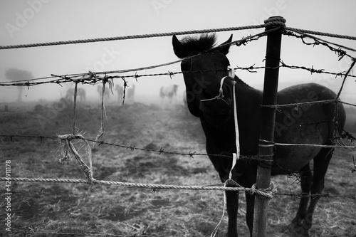 Vászonkép horse