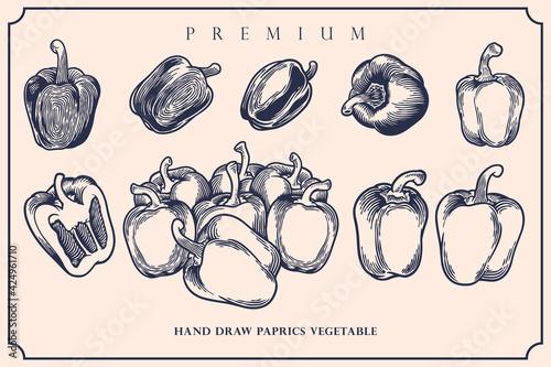 Fotomural Engraved illustration of paprika vintage set