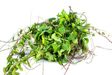 Weed Or Unwated Flora Isolated On White Background. Pile Of Green Weed Garbage Isolated