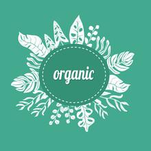 Greeen White Frame For Any Organic Presentation Vector Illustration.