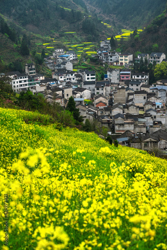 A village at the foot of the mountain in rape flowers