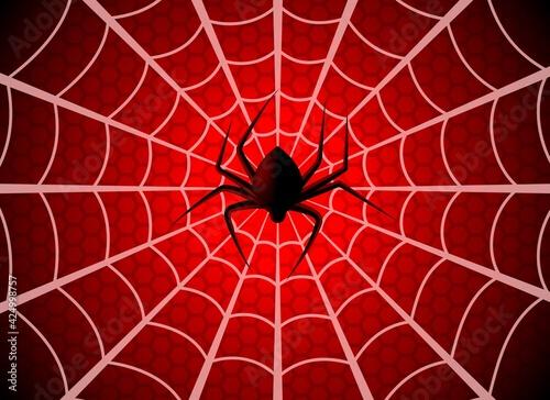 Fotomural Spider web