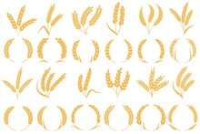 Wheat Or Barley Ears. Golden Grains Harvest, Stalk Grain Wheat, Corn Oats And Rye. Barley Organic Flour Agriculture Plant Vector Collection