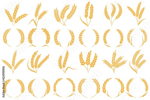 Fotografia Wheat or barley ears
