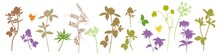 .Hand Draw  Set Of Diverse Silhouettes Of Wildflowers, Melliferous, Fodder Plants. Multicolored Floral Collection. Isolated Vector Images Of Flowers..