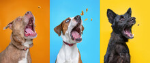 Shelter Dogs On An Isolated Background Studio Shot Catching Treats