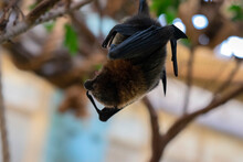 Close Up Bat At Amsterdam The Netherlands 30-12-2019