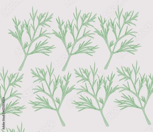Fototapeta dill plant aromatic herb  obraz