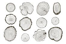 Tree Rings Hand Drawn Vector Illustrations Line Set