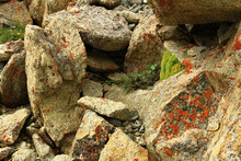Red Lichens, Green Moss And Bushes Of Plants With Wild Flowers Grow On Huge Yellow-gray Stones, Summer, Sunny