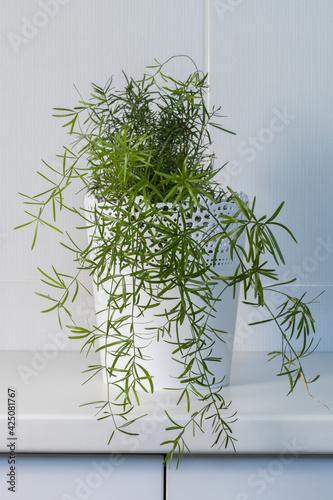 Foto Plante verte dans un pot blanc dans une salle de bain carrelée de blanc