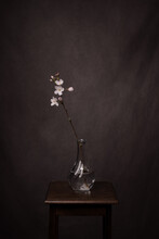 Blooming Branch Of White Cherry Blossom On A Branch In A Glass Vase On Stool In Studio In Classic Painterly Minimalistic Setting