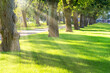 Green sunny park with trees and grass