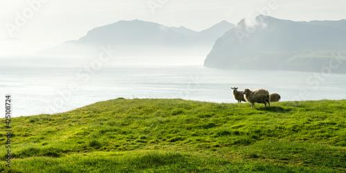 Fotografia, Obraz Morning view on the summer Faroe islands
