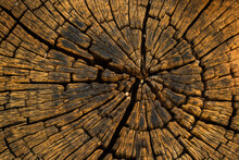 Rustic Weathered Old Wood Texture With The Cross Section Of A Cut Log