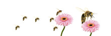Bees  Flying Over A Pink Flower