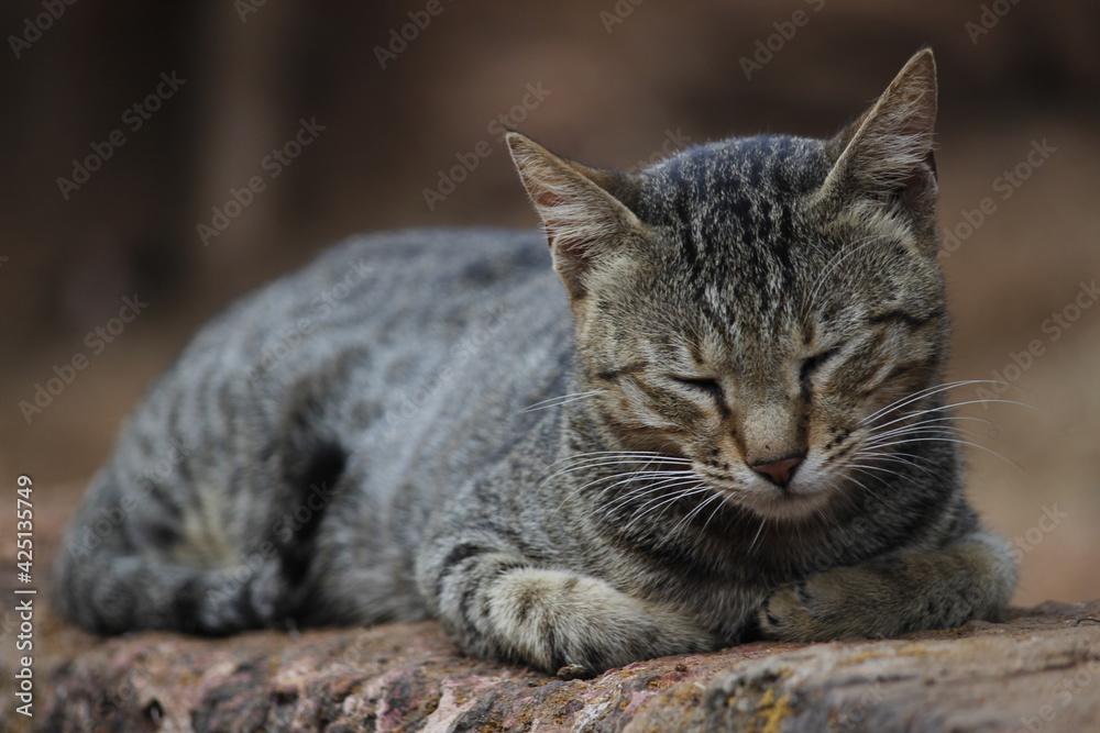 Fototapeta Sleeping cat