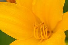 Macro De Una Flor Amarilla Con Polen