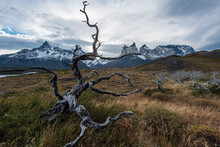 Bright And Colorful Autumn Natural Scenery, Strange Vegetation Pictures, Located In Torres Del Paine National Park, Chile, South America