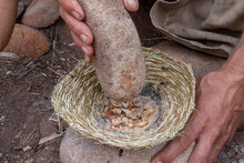 Grinding Acorns With Stone Mortar And Pestle
