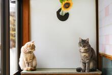 猫と造花の向日葵