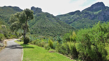 A Walking Path Winds Through The Park. Nearby, A Tree Grows On The Lawn. Ahead Is A Picturesque Green Mountain Range. Botanical Gardens In Cape Town. South Africa