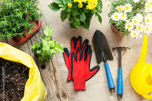 Fotografía Flowers and vegetable with gardening tools outside the potting shed