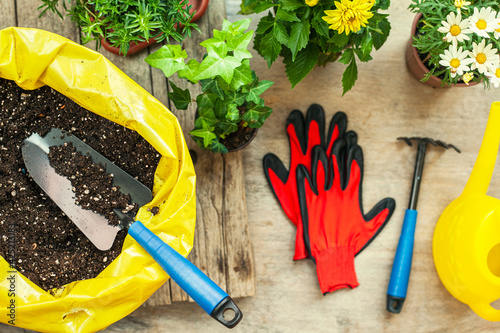 Fotomural Flowers and vegetable with gardening tools outside the potting shed